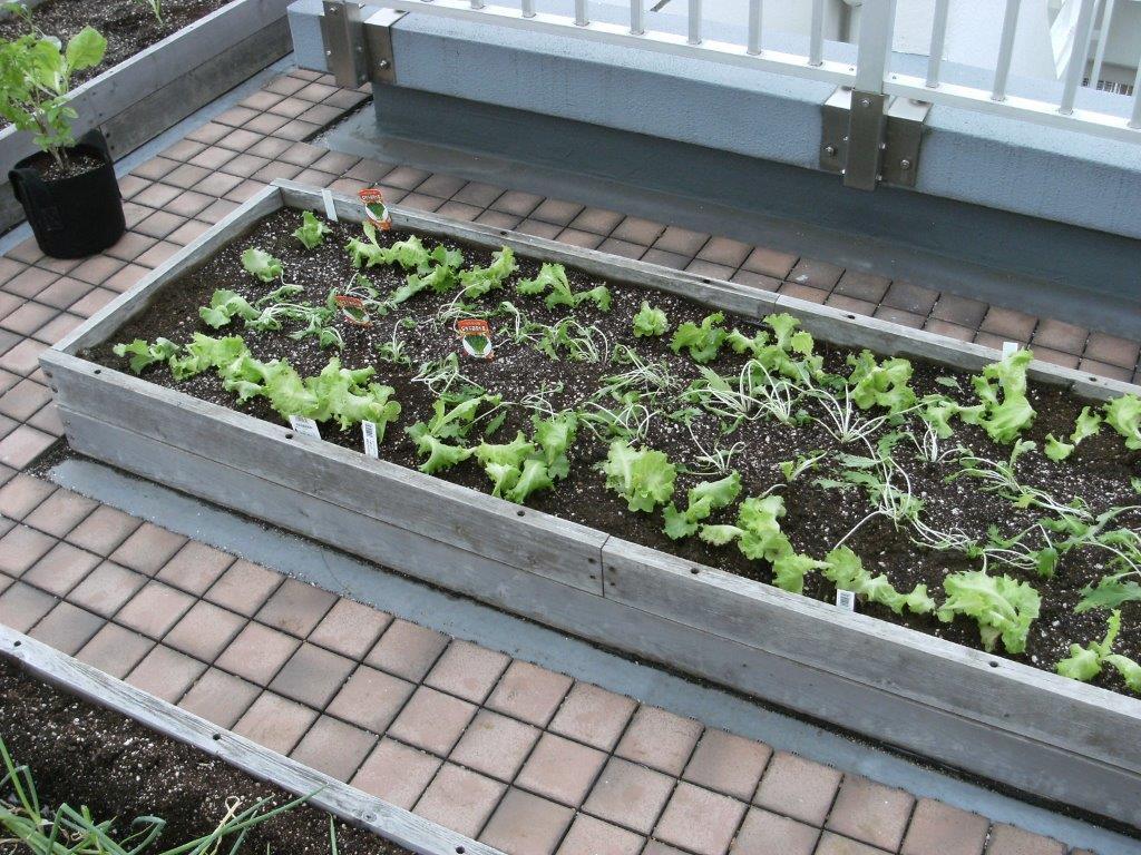 屋上菜園キット